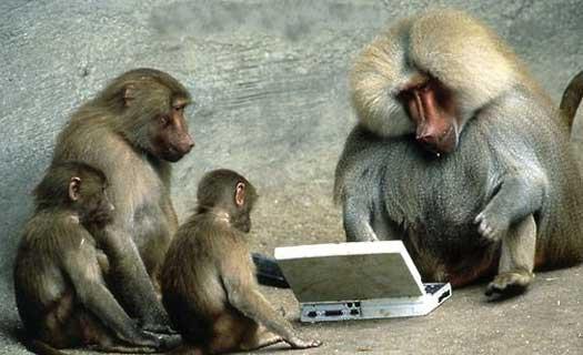 baboonnet.jpg